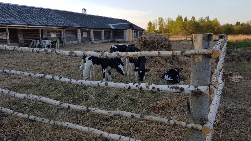 «Один день на ферме»