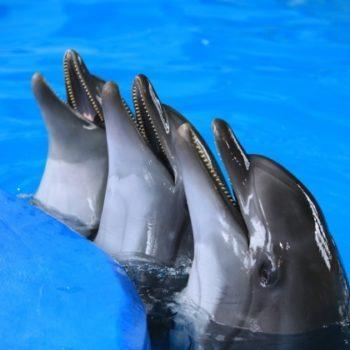 Дельфинарий – Dolphin Planet