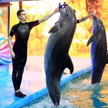 Загородный комплекс «Dolphin Planet»