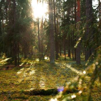 Эко-тропа «Заповедный лес»