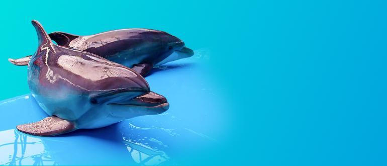 Дельфинарий — Dolphin Planet